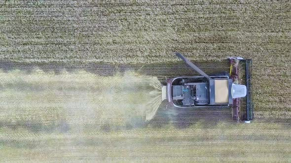 Thumbnail for Aerial View of Combine Harvester. Harvest of Rapeseed Field. Industrial Background on Agricultural