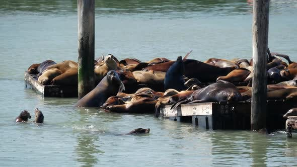 Thumbnail for Sea lions on Pier
