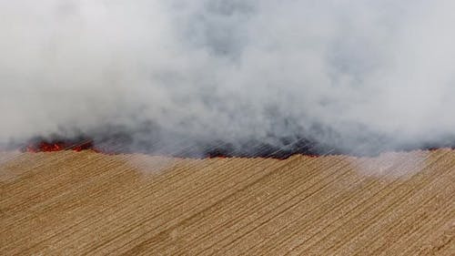 Burning Stubble on Fields