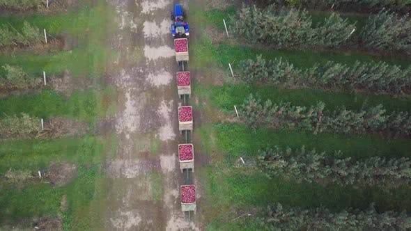 Tractor With Trailers From Apples