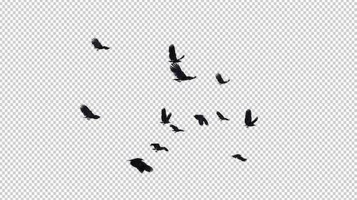 13 Black Birds - Fliegende Transition II