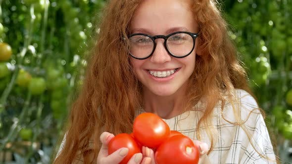 Thumbnail for Young Woman Hands with Gloves Holding Red Tomatoes, Working in a Greenhouse.