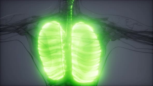 Thumbnail for Human Lungs Radiology Exam