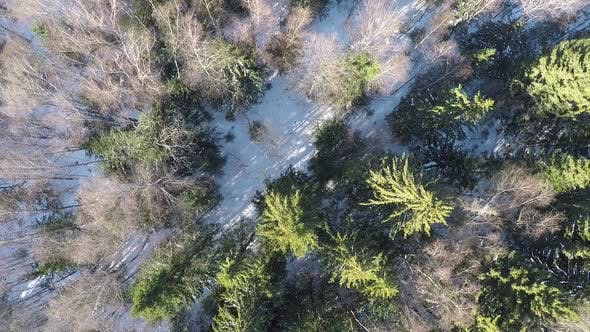 Thumbnail for Aerial Winter Scene of Mixed Forest