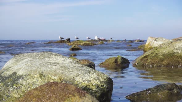 Thumbnail for Large Stones in Calm Water on the Horizon Gulls and Ships