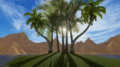 Sun Throw Palms 2K