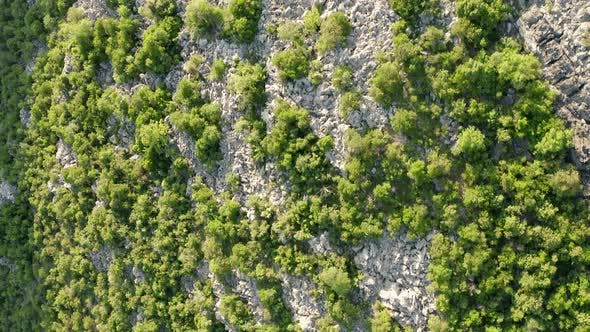 Rocky terrain with sparse green vegetation consisting of bushes, shrubs and low trees