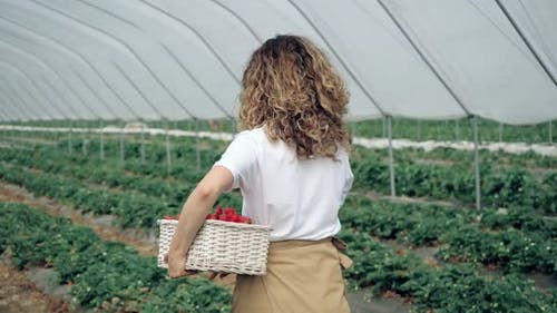 Smiling Woman Walking with Strawberries at Hothouse