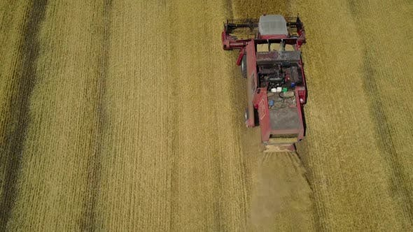 Thumbnail for Harvesting Wheat Field