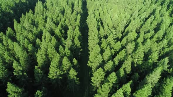 Thumbnail for Drone view of forest with a road