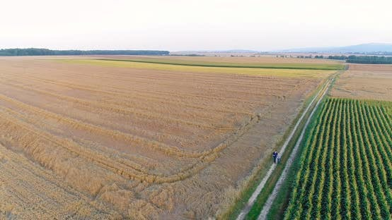 Thumbnail for Agriculture Aerial Shoot, Farmer walking and looking at Crops, Agriculture