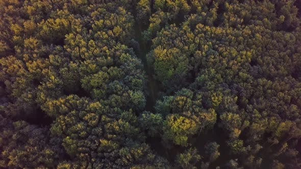 Aerial View of Green Sunny Forest in Golden Summer Evening Nature