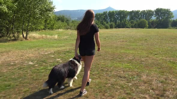 Cover Image for A Woman and Her Border Collie Walk Across a Meadow in a Forest - View From Behind