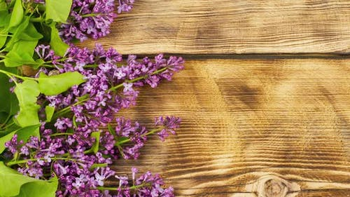 Branches of Fresh Fragrant Lilacs Lie on a Burnt Wooden Background