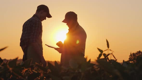Thumbnail for Two Men Farmer Working in the Field at Sunset, Using a Tablet