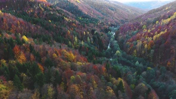 Thumbnail for Vintage Autumn Colors