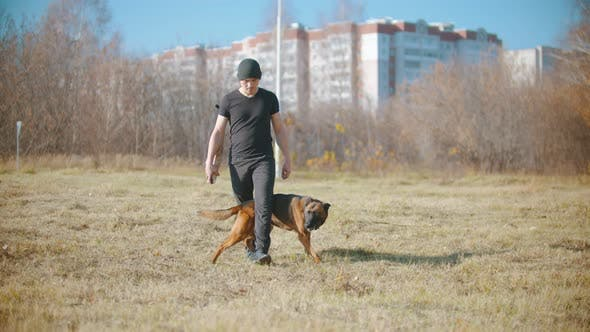 Thumbnail for A Man Training His German Shepherd Dog - the Dog Walking Between the Trainer Legs