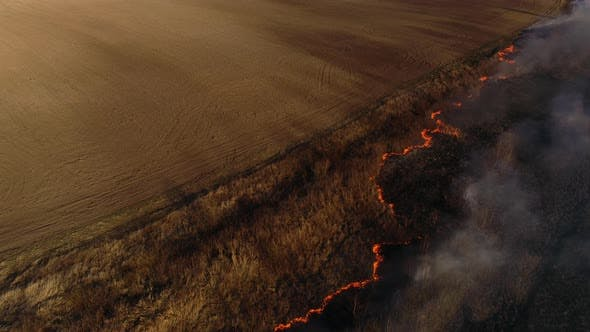 Thumbnail for Dry Lanes and Grass on Swamp in Fire, Ecology Disaster