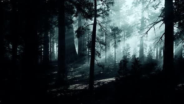 Schwarzer Baumstamm in einem dunklen Kiefernwald