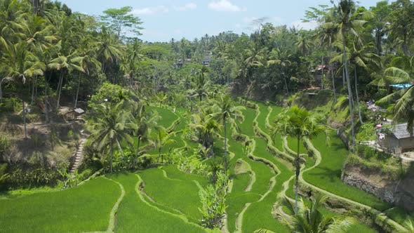 Thumbnail for Aerial drone view of beautiful rice terraces
