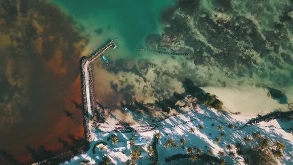 Thumbnail for Coral Caribbean Beach