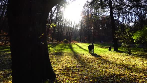 Thumbnail for Lawn in the autumn park.
