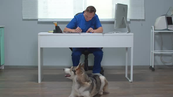 View of Husky Lying on the Floor and Vet Sitting at a Table and Writing