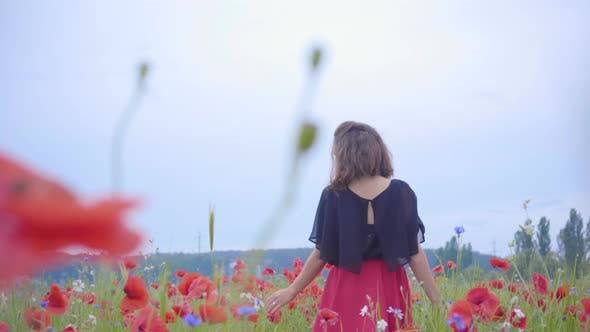 Cover Image for Young Girl Walking Through Poppies Field. Female Hand Touching Red Poppy Flowers Close-up. Love
