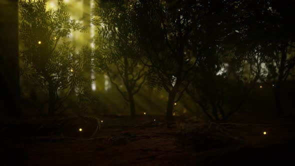 Thumbnail for Firefly in Misty Forest with Fog