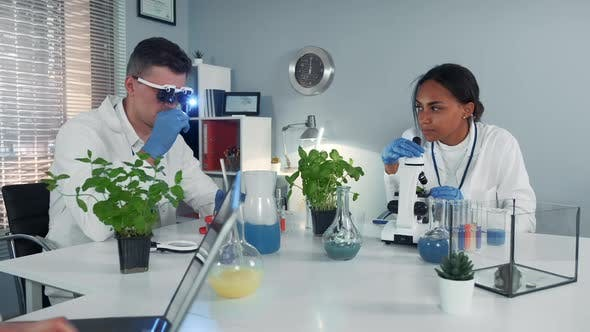 Working Process of Two Mixed Race Scientists in Modern Chemistry Laboratory