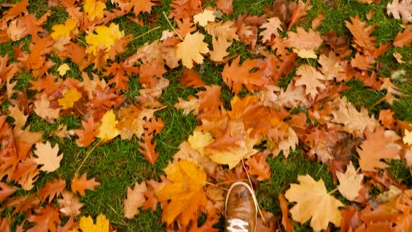 Man Shoes in Fallen Autumn Leaves. Step To Step Concept. Feet in Shoes Stepping on Fallen Leaves