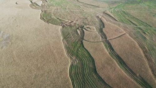 Aerial View of Ruts From Wheels on a Cane Plantation