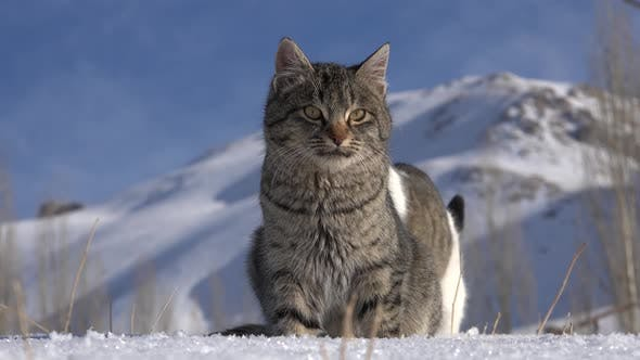 Thumbnail for A Cat on the Snow During the Winter