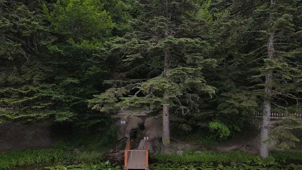 Pine Natural Forest Hilltop Aerial