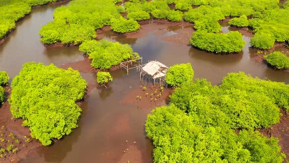Cover Image for Natural Landscape Aerial View of Mangrove Forests and Aboriginal Hut on the River's