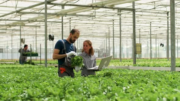 Thumbnail for Team of Agronomy Engineers Working in a Modern Greenhouse