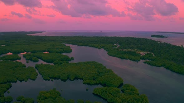 Thumbnail for Aerial View of Mangrove Forest and River on the Siargao Island at Sunset Time