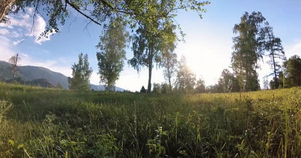 Sunny Rural Meadow at Mountain Landscape with Green Grass, Trees and Sun Rays. Diagonal Movement