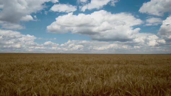 Thumbnail for Clouds Float on The Endless Wheat Fields