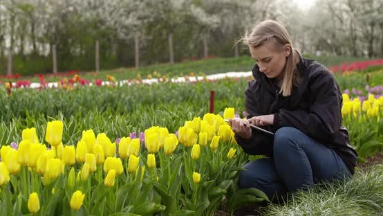 Thumbnail for Agriculture Female Botanist Examining Tulips At Field
