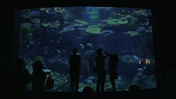 Thumbnail for People Visiting Oceanarium