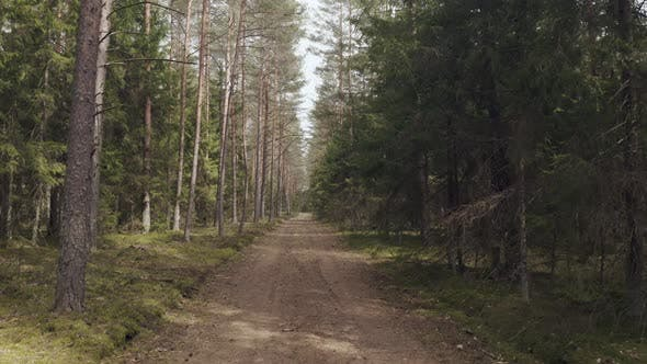 Forest Road in Spring Time, Lithuanian Wood