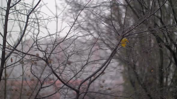 Thumbnail for Late Autumn Scene with Bare Trees and Falling Snow