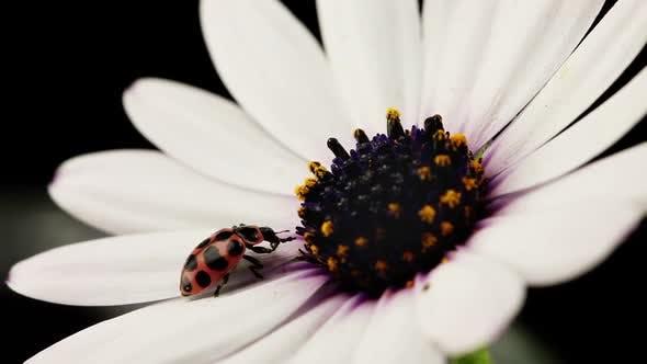 Macro Shot Of A Ladybug