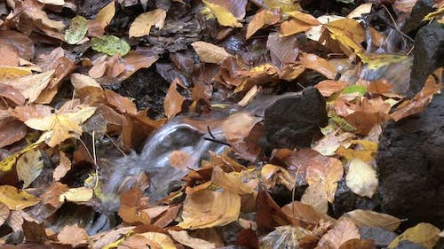 Little Rivulet Through Dry Leaves in Autumn