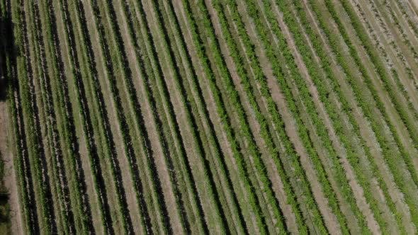 Thumbnail for Aerial View of Vineyard Valley.