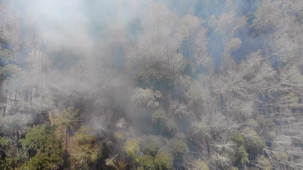 Thumbnail for Climate emergency.High Aerial Fly Over View of a Forest Fire