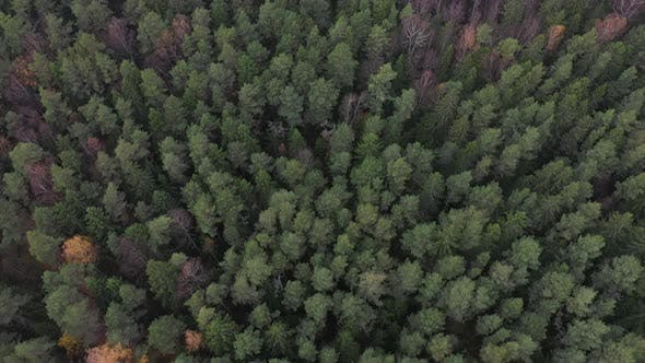 Thumbnail for Aerial view of forrest in autumn