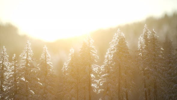 Thumbnail for Splendid Christmas Scene in the Mountain Forest. Colorful Winter Sunrise