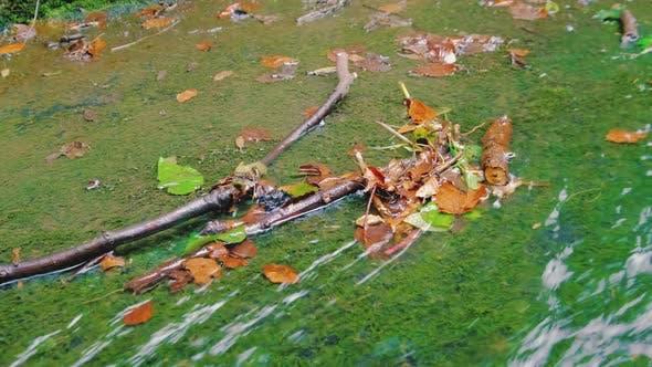 Kristallwasser im Herbstwald.